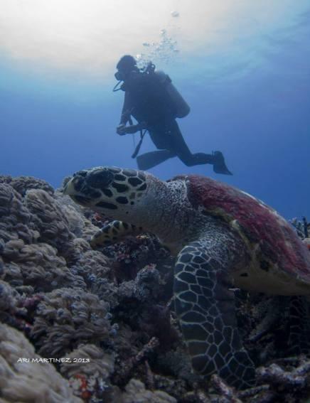Me & Mr. Turtle