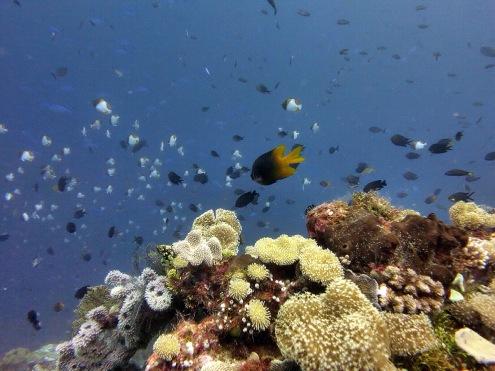 Koral cantik dan ikan-ikan imut