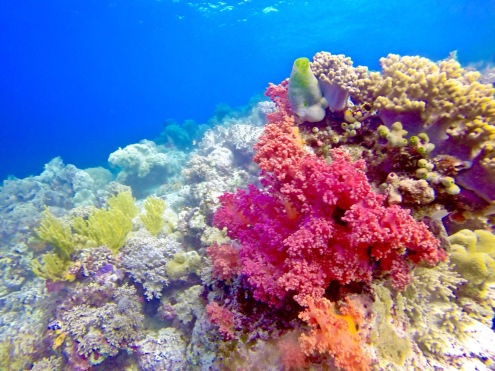 Colorful coral. Photo by Carolus Kelvin