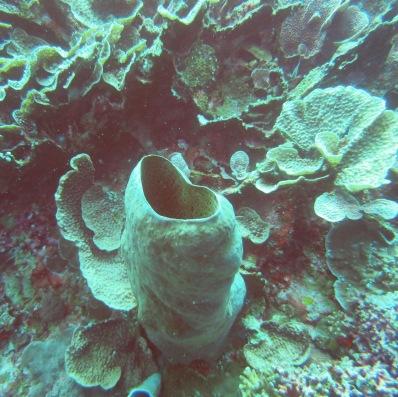 Another heart shaped coral. Masih banyak lagi loh :)