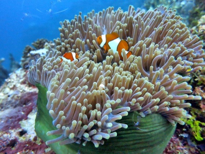 Nemo dan rumahnya