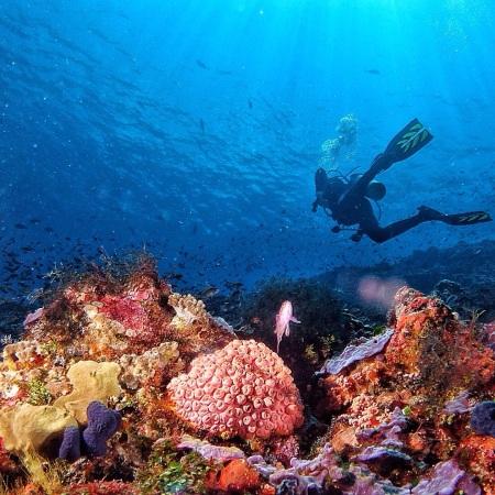 Colorful & healthy corals