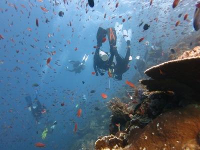 Menyelam di dive site Batu Bolong